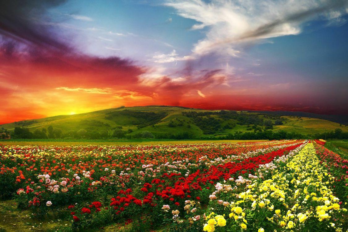 Яркие картинки на обои природа