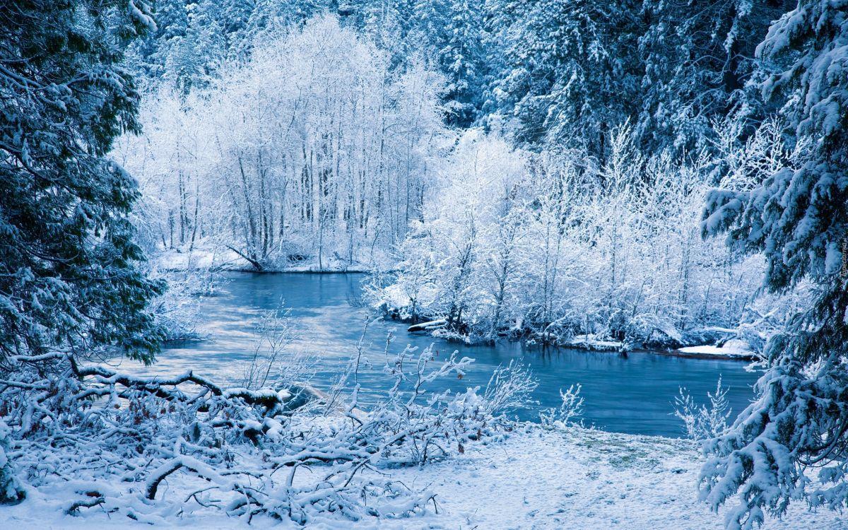 лодка снежная красота в картинках орлов-змееядов очень низкая
