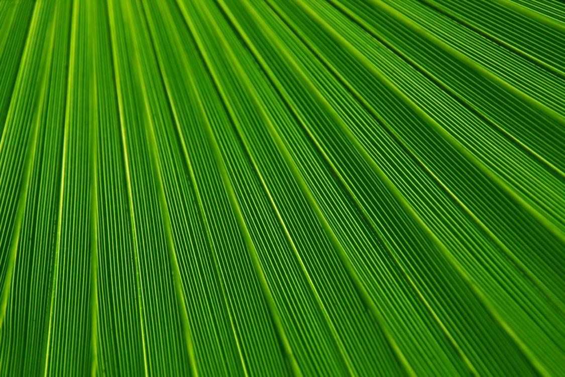 Обои лист, зеленый, ствол, поле, растение в разрешении 5000x3333