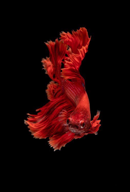 Обои человеческое тело, арт, мышца, красный цвет, плоть в разрешении 3800x5600
