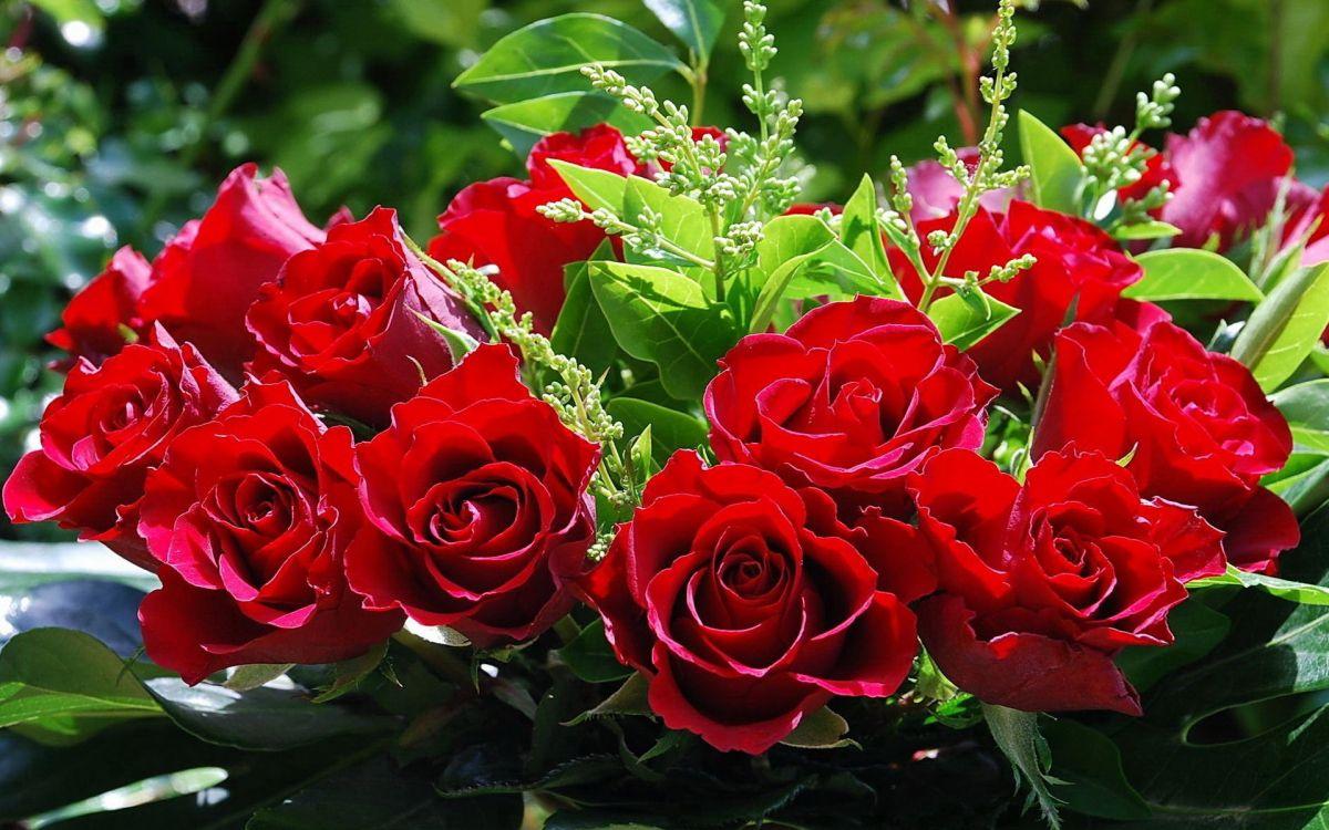 которым открытки красивые цветы розы настроенные