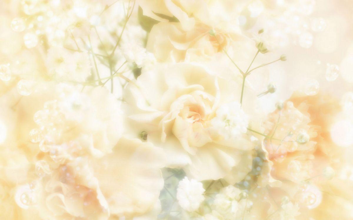 Обои свадьба, цветок, цветочный дизайн, цветочный букет, желтый в разрешении 3200x2000