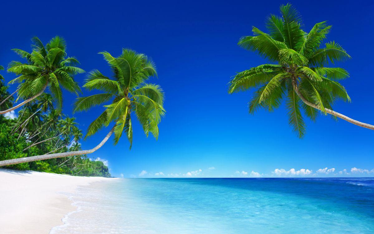 братья пальмы природа картинки традиционное дерево