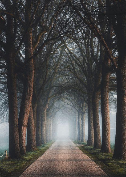 Обои древесные растения, лесистая местность, природный ландшафт, свет, дерево в разрешении 2374x3323
