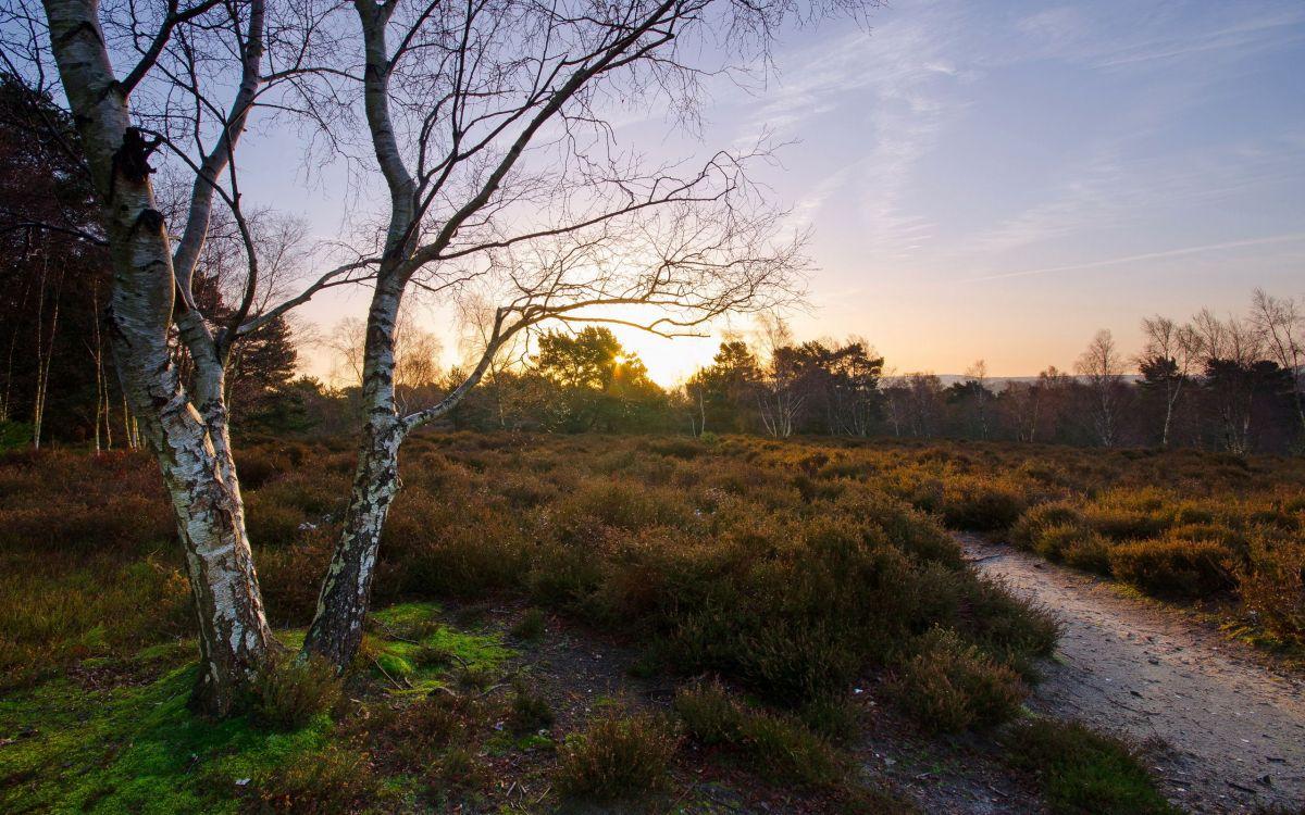 Обои пейзажная живопись, пустыня, закат, путь, небо в разрешении 2560x1600