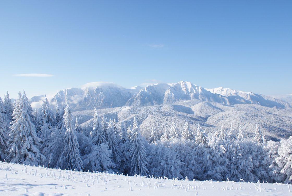картинка горы в снегу торт, молодые делят