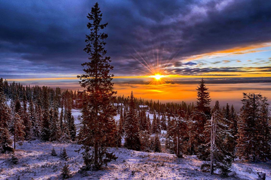 счету картинки северного леса реке тихо медленно