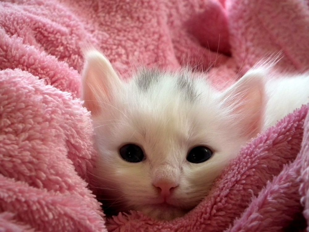 Картинки с милыми и красивыми котятами