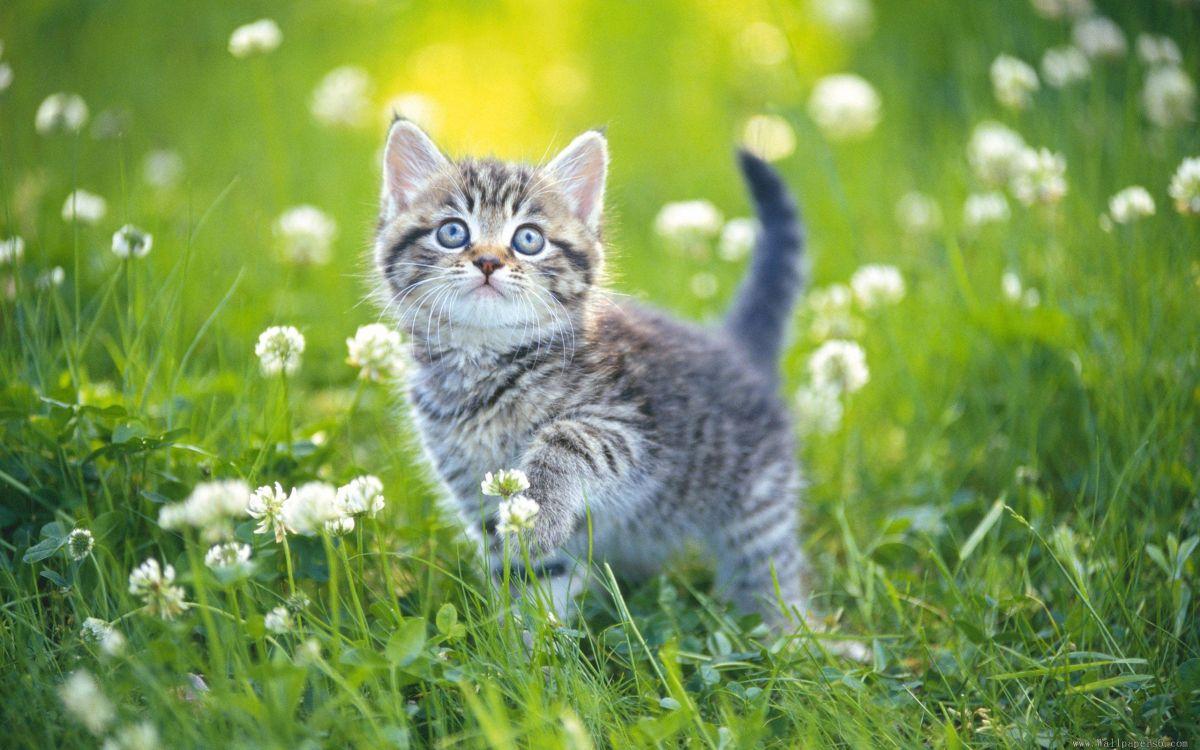 измайловском летний кот картинка оценили