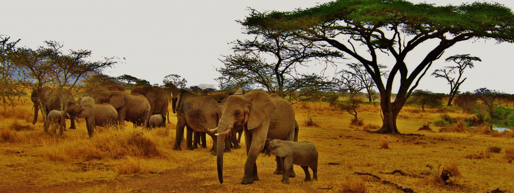 Обои природный заповедник, пустыня, путешествие, Саванна, индийский слон в разрешении 4212x1583