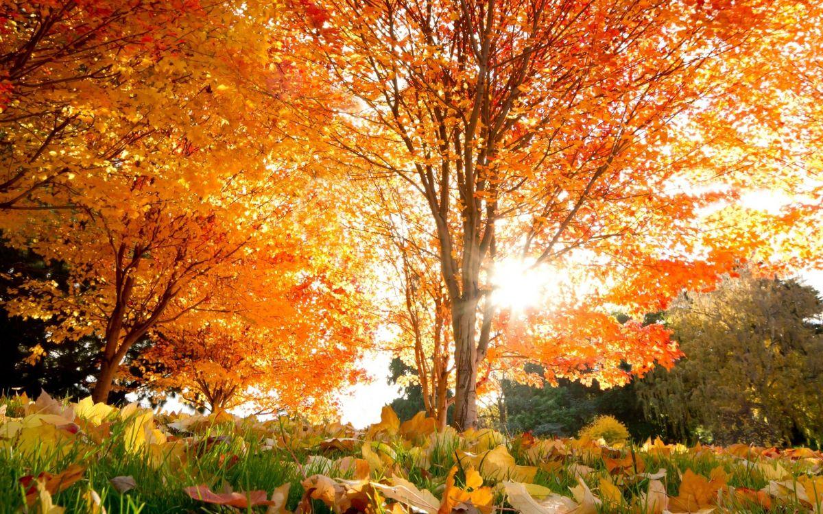 все картинки золотая осень крепится трубочке при