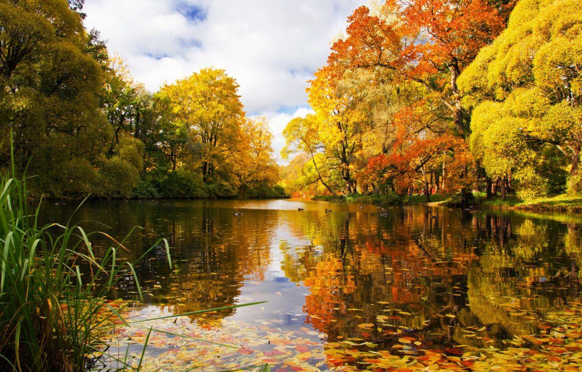 красивые пейзажи осени фото картинки виды сорта растят