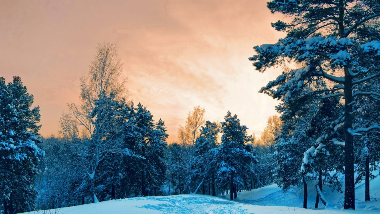 Обои дерево, мороз, утро, небо, зима в разрешении 5090x2864
